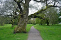 Tree and road to the blarney castle landscape old Stock Image