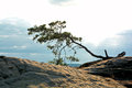 Tree on a rock Royalty Free Stock Photo