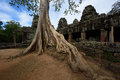 Tree root ancient in siem reap cambodia Stock Photos