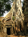 Tree root sit on a ruin ancient building at Angkor Stock Image