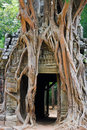 Tree root sit ruin ancient building angkor wat cambodia Royalty Free Stock Image