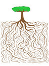 Tree root system Stock Photo