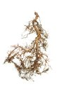 Tree root on white background Royalty Free Stock Photo