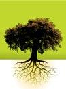 Strom korene