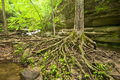 Tree roots and boulders numerous in the streambed matthiessen state park illinois Royalty Free Stock Image