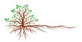 Tree with roots. Royalty Free Stock Photo