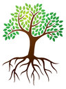 Royalty Free Stock Images Tree Roots Logo