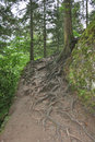 Tree roots on pathway in sumela trabzon turkey Stock Photo