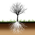 Tree roots silhouette Stock Photography