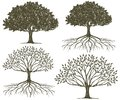 Tree & Tree Roots Silhouette Collection Royalty Free Stock Photo