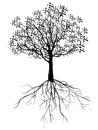 Tree with roots silhouette design Stock Photos
