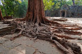 Tree roots in ta prohm temple angkor cambodia siem reap Stock Photography