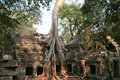 Tree roots in Ta-Prohm temple, Cambodja Stock Image