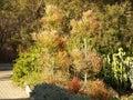 Tree's Royalty Free Stock Photo