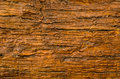 Tree s bark texture close up Royalty Free Stock Photos