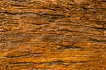 Tree s bark texture close up Royalty Free Stock Photo