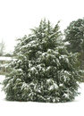 Tree in sc snow this was my backyard i shot this during a snowstorm Royalty Free Stock Photography