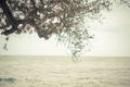 Tree with sea background Royalty Free Stock Photo