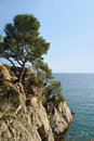 Tree on sea rocky coast Royalty Free Stock Photo