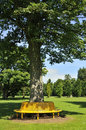 Tree seat view of landscape rozelle park ayrshire scotland showing trunk in foreground encircled by yellow Royalty Free Stock Photography