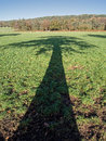 Tree Shadow Across English Countryside Royalty Free Stock Photo