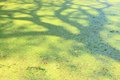 Tree shadow reflection on water Royalty Free Stock Photo