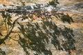 Tree shadow on stone ground Royalty Free Stock Photo