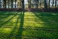Tree shadows on the ground. Royalty Free Stock Photo