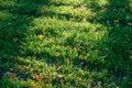Tree shadows on the ground Royalty Free Stock Photo