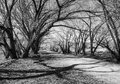 Tree shadows interesting on a dirt path through overhanging cottonwood trees in winter Stock Photo