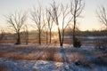 Tree Shadows on the Snow at Sunrise Royalty Free Stock Photo