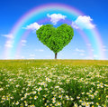 Tree in the shape of heart field marguerites with and rainbow Royalty Free Stock Photography