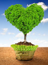 Tree in the shape heart growing pot Royalty Free Stock Images