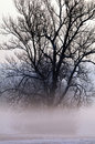 Tree shrouded in mist Royalty Free Stock Images