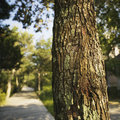 Tree and sidewalk. Royalty Free Stock Image