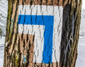 Tree signpost blue for hikers on the trail Royalty Free Stock Images