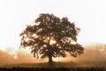 image photo : Tree Silhouette