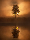 Tree silhouette on a fog at sunrise Royalty Free Stock Photos