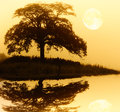 Tree silhouette and full moon with reflection over rippled water Royalty Free Stock Image