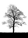 Tree silhouette isolated on white Stock Photos
