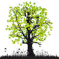 Tree silhouette old, grass Royalty Free Stock Image