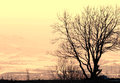 Tree silhouette seasonal nature image lonely winter with mountain landscape and skyline horizon as a background can be used as a Stock Photography