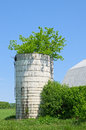 Tree in Silo Royalty Free Stock Image