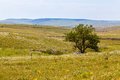 Tree a single lone in a beautiful rural landscape in south italy Royalty Free Stock Photo
