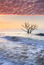 Tree Skeleton Botany Bay Ocean  Cotton Candy Sky Charleston SC Royalty Free Stock Photo