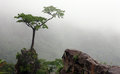 Tree on the slope a in cloudy mizoram ne india Stock Photography