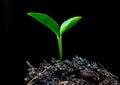 Tree small plant Royalty Free Stock Photo