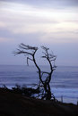 Tree snag silhouette at sunset on an oregon beach near yaquina head newport Stock Images