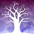Tree in snow overnight Royalty Free Stock Photo