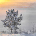 Tree in the snow at sunrise Stock Images